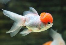 Mơ thấy cá là điềm báo gì?