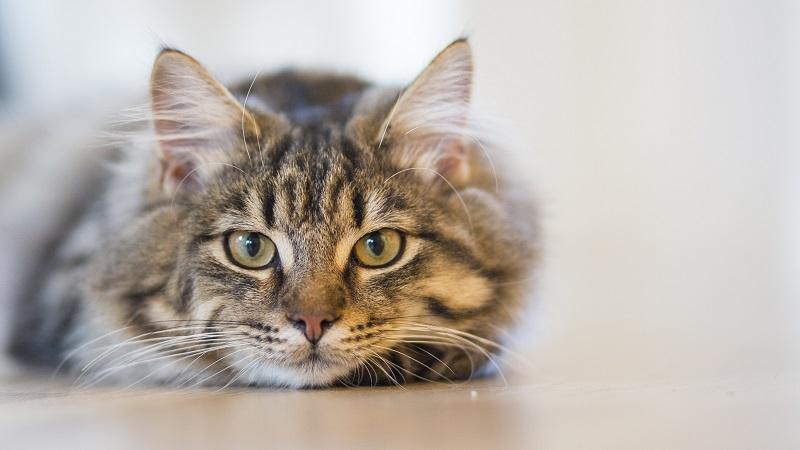 Giải mã giấc mơ thấy mèo là điềm báo gì?