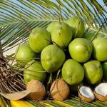 Ngủ nằm mơ thấy quả dừa là điềm gì?