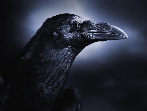 Ngủ mơ thấy quạ là điềm báo gì?