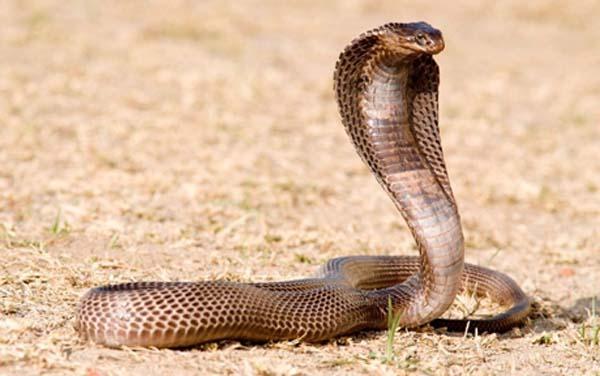 Mơ thấy rắn đuổi là điềm báo gì?