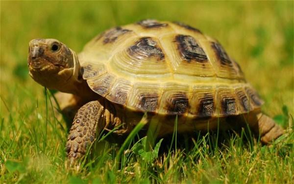 Mơ thấy rùa là điềm báo gì trong cuộc sống của bạn?