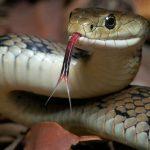 Ngủ mơ thấy rắn đuổi là điềm lành hay dữ?