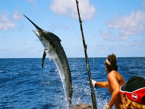 Mơ đi câu cá dự báo trước điềm gì?